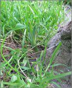 Mrazuodolné juky - rod Yucca - Stránka 2 IMG_2056