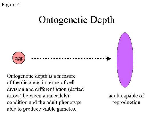 Understanding Ontogenetic Depth: Naming Versus Measuring Pn1234