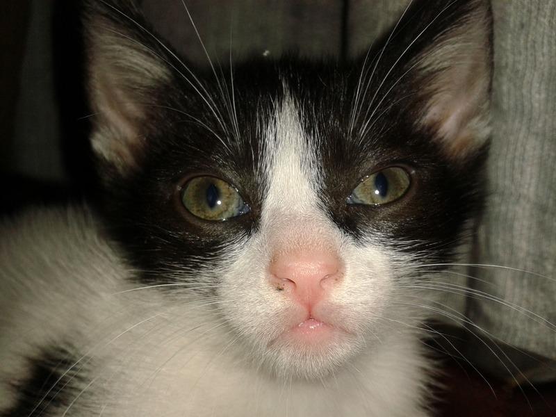 3 γατάκια, 2 μηνών 20140807_211716