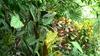 Alte  plante
