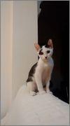 Χαρίζεται άμεσα πανέμορφο γατάκι (αγόρι) στη Θεσσαλονίκη 10521702_10204230965315909_8911961973061965983_o