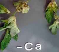 Nutrição de Plantas Aquaticas: Função, Deficiência e Fertilização. Nutricao_vegetal_7