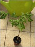 Určení druhu rostliny P4210058