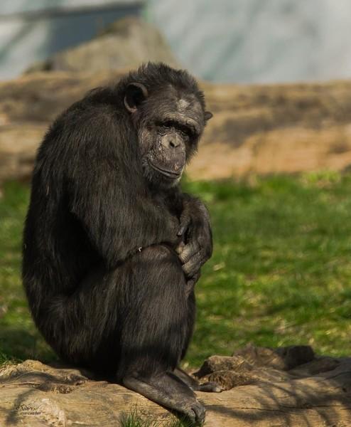 Majmuni - Page 3 Letok5gjo1f