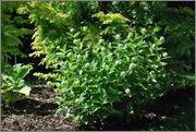 Léto na zahradě - Stránka 2 DSC_0017