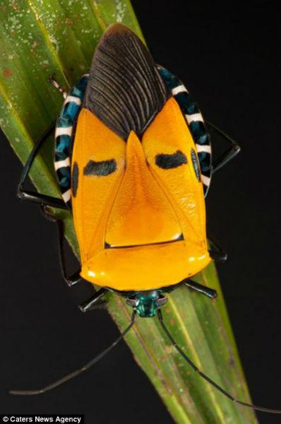 Los curiosos patrones de color en la naturaleza Cara_insecto9