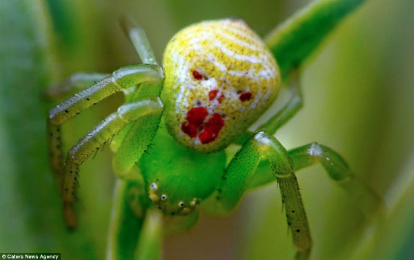 Los curiosos patrones de color en la naturaleza Cara_insecto5