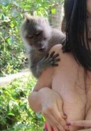 UNA PIEZA MUY MONA  Monos