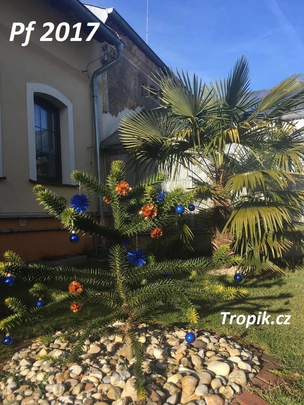 Vánoce a Nový Rok 15682301_1891029657795004_1026858908_o