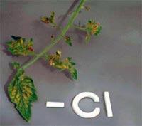 Nutrição de Plantas Aquaticas: Função, Deficiência e Fertilização. Nutricao_vegetal_9