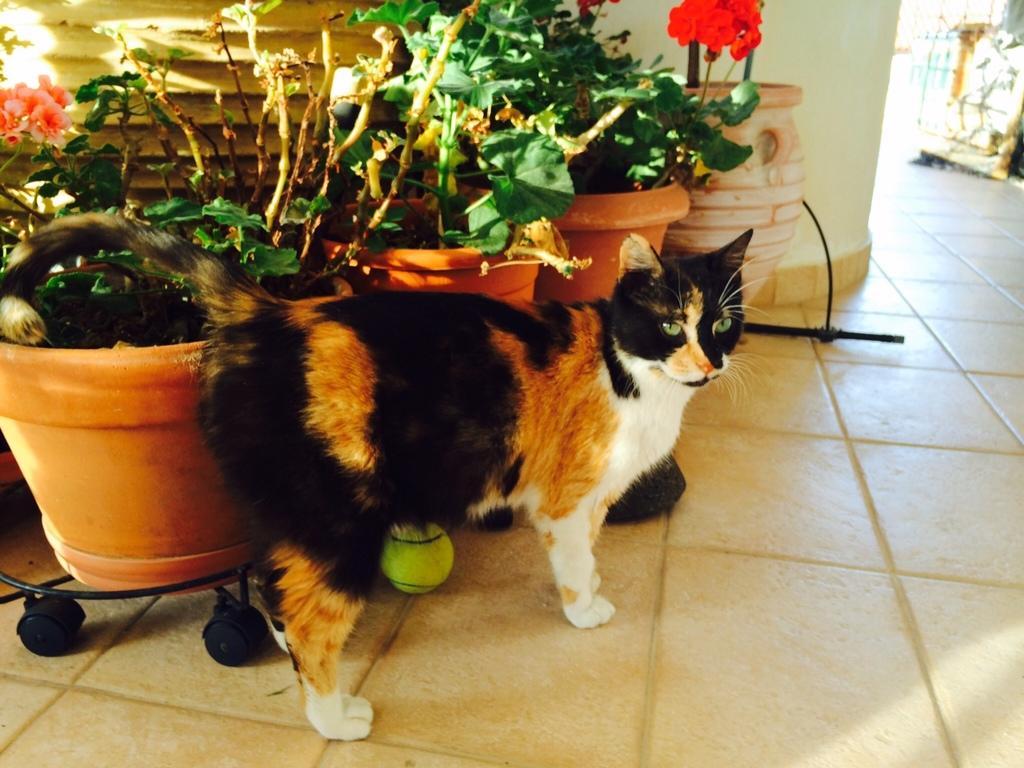 Κάρι, μια υπέροχη γατούλα και τα 4 μωράκια της - Σελίδα 5 Milou_1