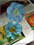 Скрапбукинг. Голубой мак, карандашница или декорваза для сухоцветов. 1_DSCF1959