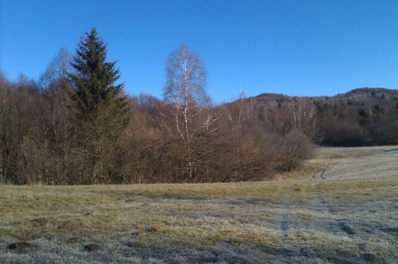 Izrada ogrijevnog drva IMAG0608