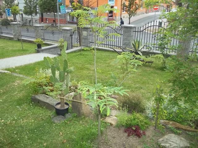 Léto na zahradě 010