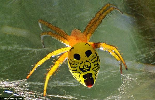 Los curiosos patrones de color en la naturaleza Cara_insecto6