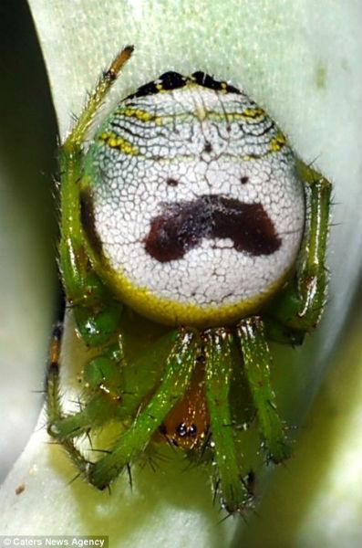 Los curiosos patrones de color en la naturaleza Cara_insecto
