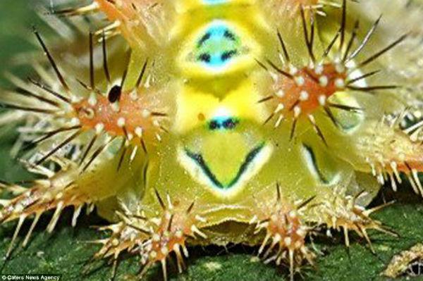 Los curiosos patrones de color en la naturaleza Cara_insecto2