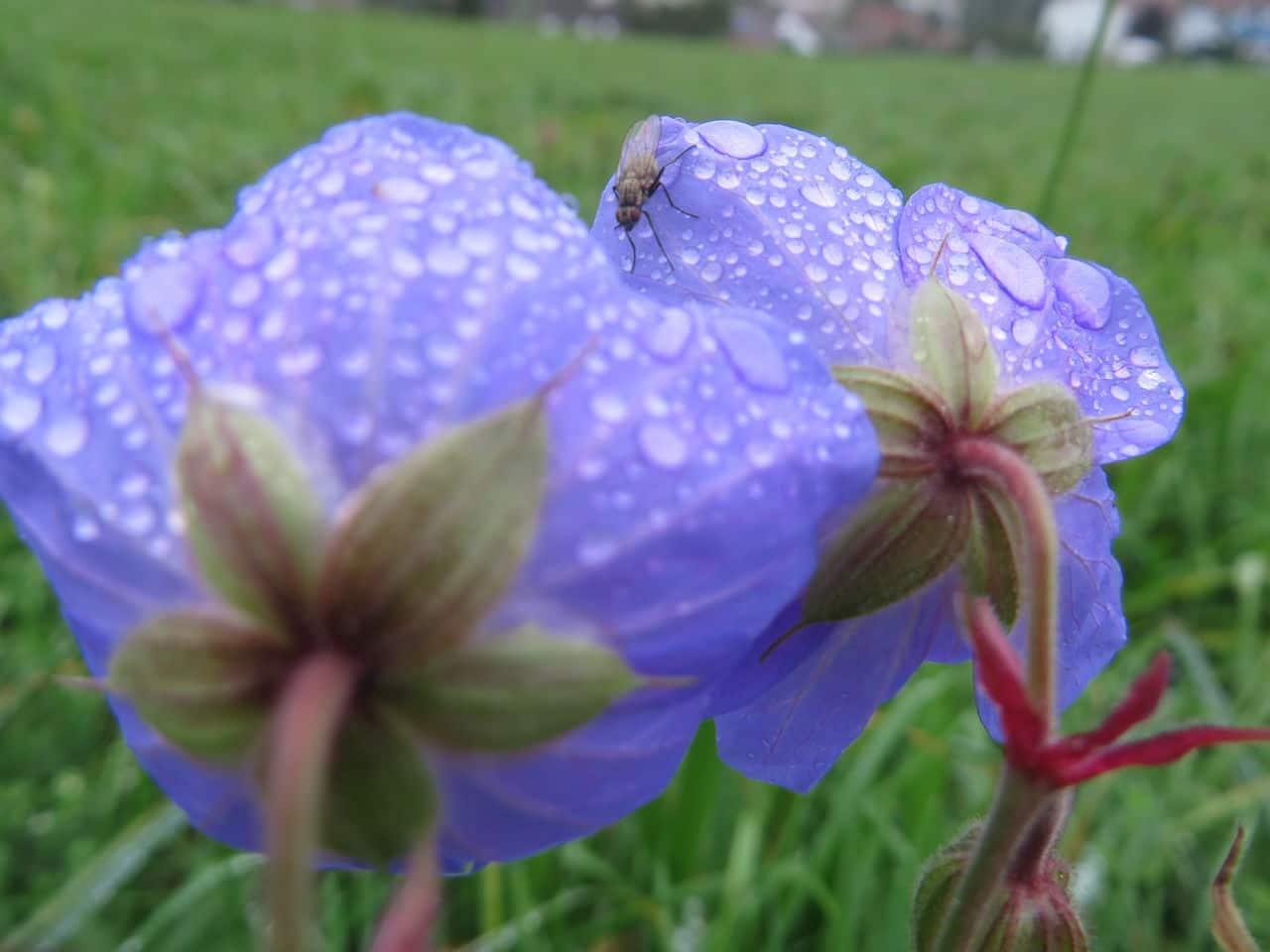 Auch Dauerregen hat seine schönen Seiten IMG_1175
