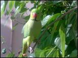 صور جدا جميلة ورائعة ميمو متو على شجرة التوت 317572_____