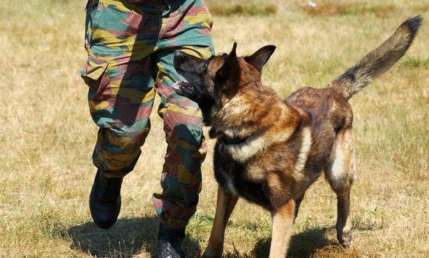 معلومات لا تعرفها عن الكلاب البوليسية Large