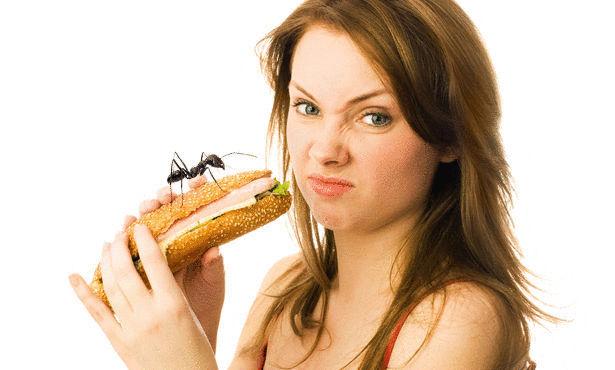 كيف تتخلص من النمل Large