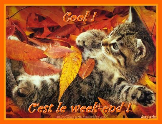 Samedi 11 octobre Chat-automne-week-end
