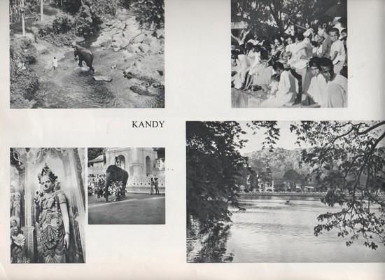 Présentation - Page 7 KANDY-001