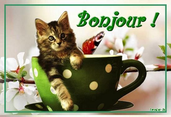 Samedi 12 mars Chat-bonjour-A