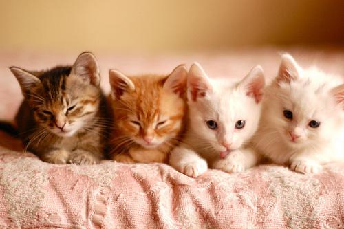 Animale... - Page 17 Aww-cat-cats-cute-heart-Favim.com-329720