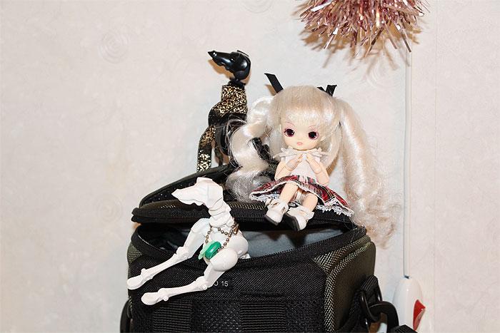 Obitsu Dogs 29a2d3993e0cadecb77c9e44ae566ab4