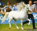 Транспортные средства: лошади, ящеры и т.д. Aa7269b5a79b9f1589d08041f511f9f8