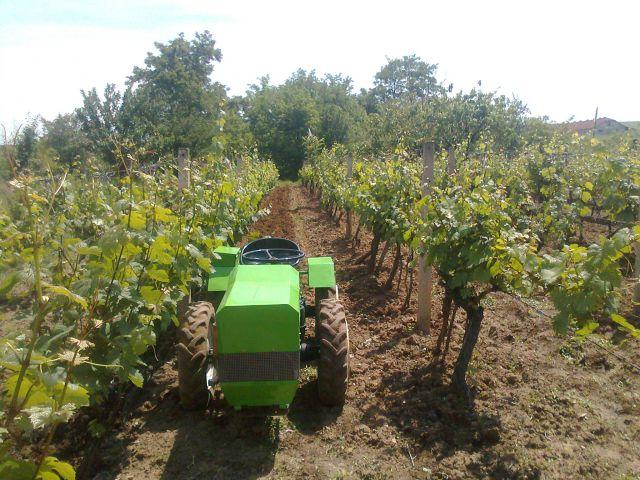 Radovi & poslovi u vinogradu 19748591
