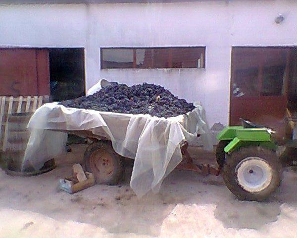 Radovi & poslovi u vinogradu 21102224