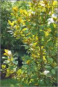 Léto na zahradě DSC_0118