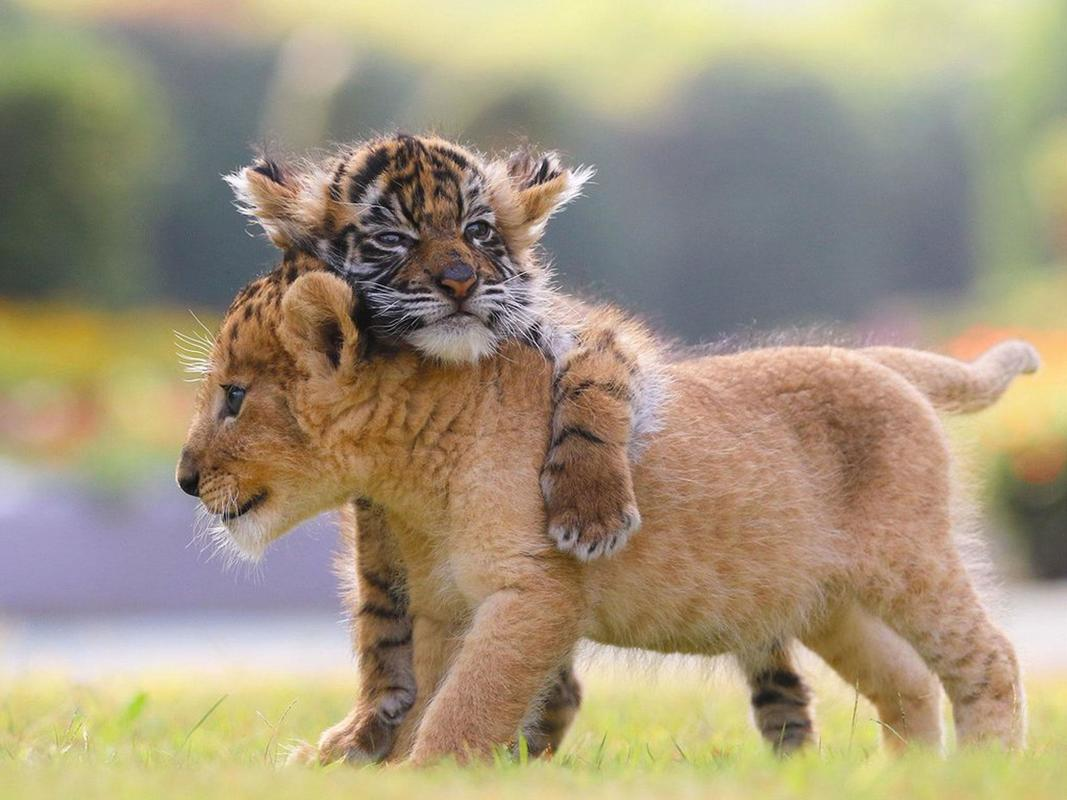 ITT: Cuteness!!!!  Cubs9