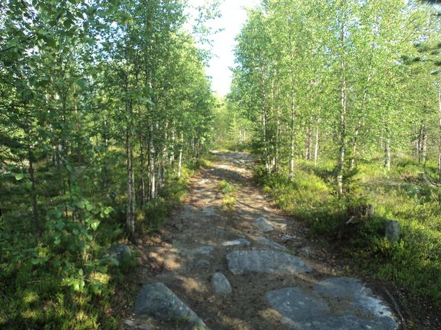 А в лесу сейчас хорошо! - Страница 4 DSC00792