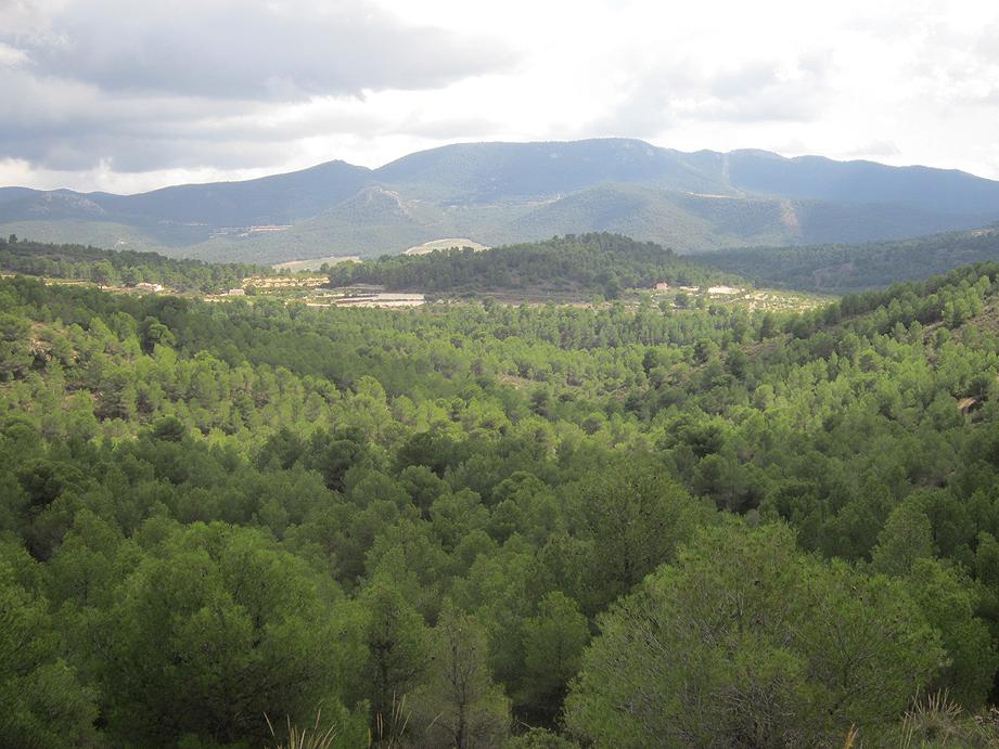 EL RECONCO,Biar + COVA NEGRA (ruta motosenderista) Biar5