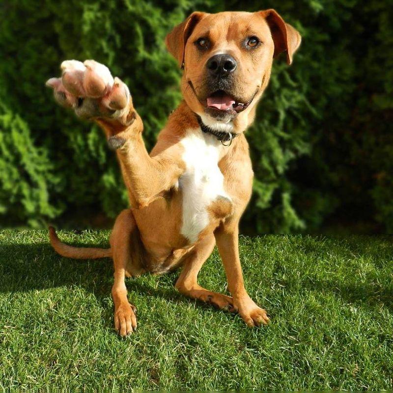 Posvojitev psa iz zavetišča 10386940_337677483050056_7483999675558255614_o