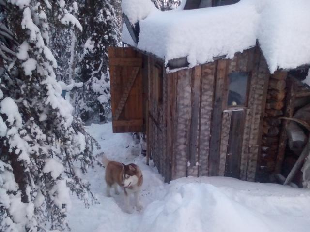 Не Аляска,но! IMG_20150104_131811