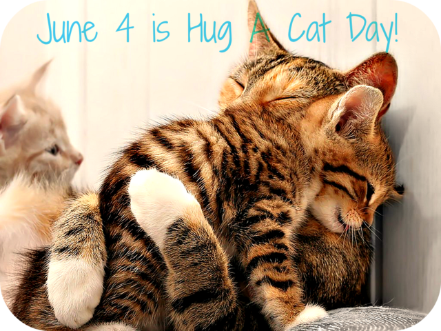 Sure, there's no Caturday thread - Page 4 Hug_Your_Cat_Day