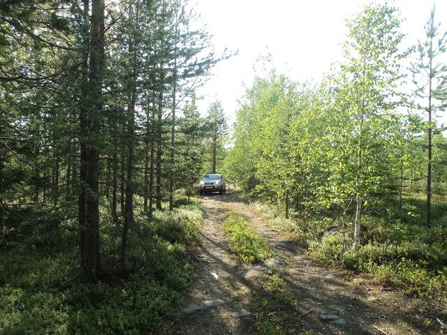 А в лесу сейчас хорошо! - Страница 4 DSC00791