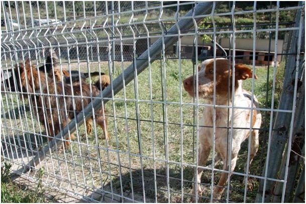 Neue Auffangstation....Tiere in Spanien 4381392