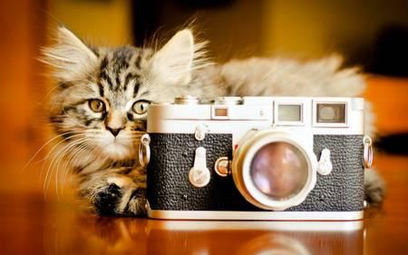 Фотоаппараты ZgeHR