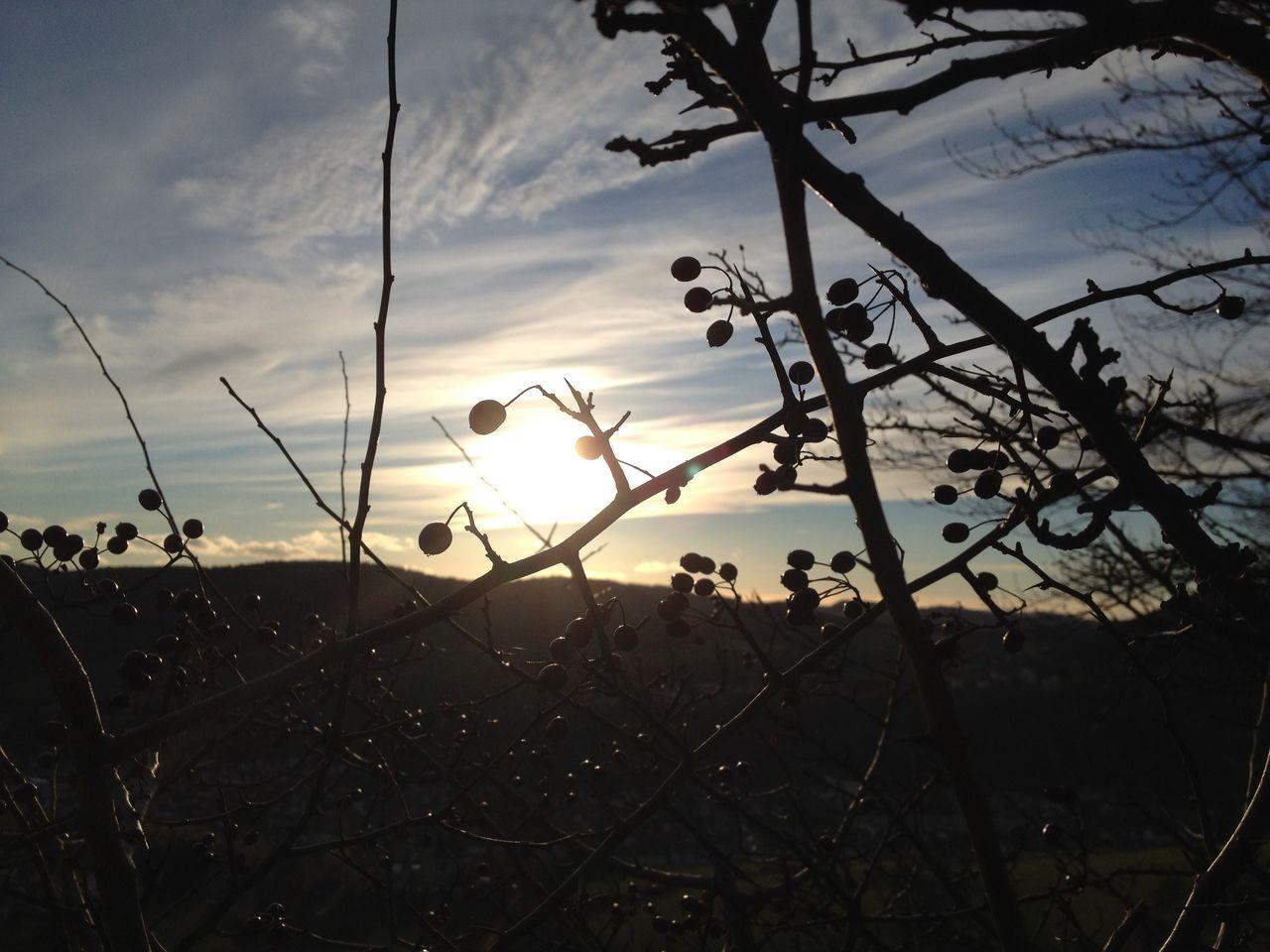 Sonnenbilder IMG_3061