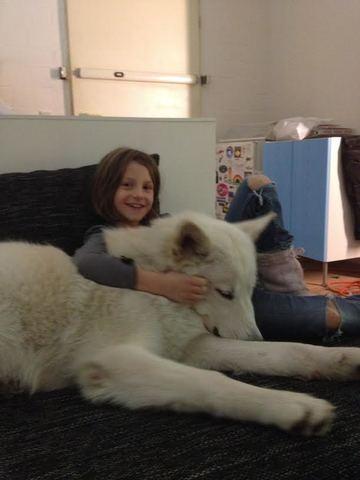 Alaskan noble companion dog Unnamed_4