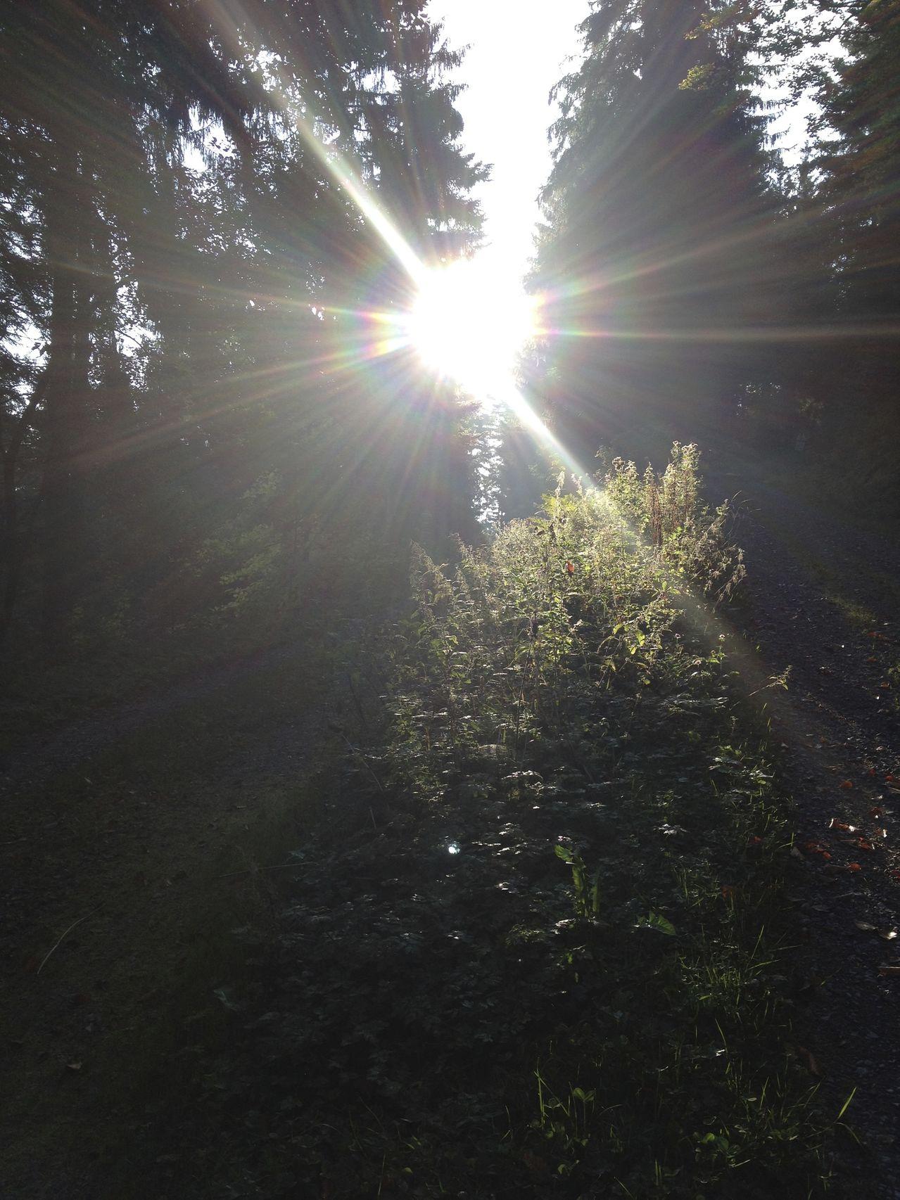 Sonnenbilder IMG_2795