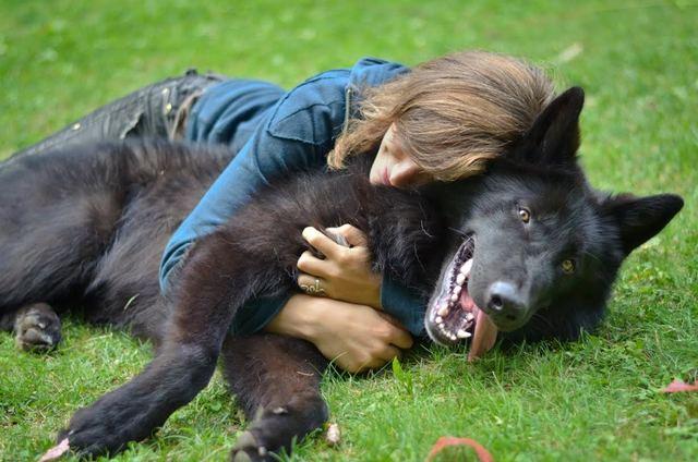 Alaskan noble companion dog Unnamed