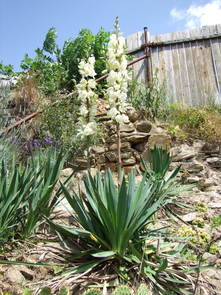 Léto na zahradě DSCF5951