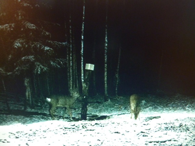 Boars Cam, Winter 2013 - 2014 - Page 4 The_couple_again_23_12_004