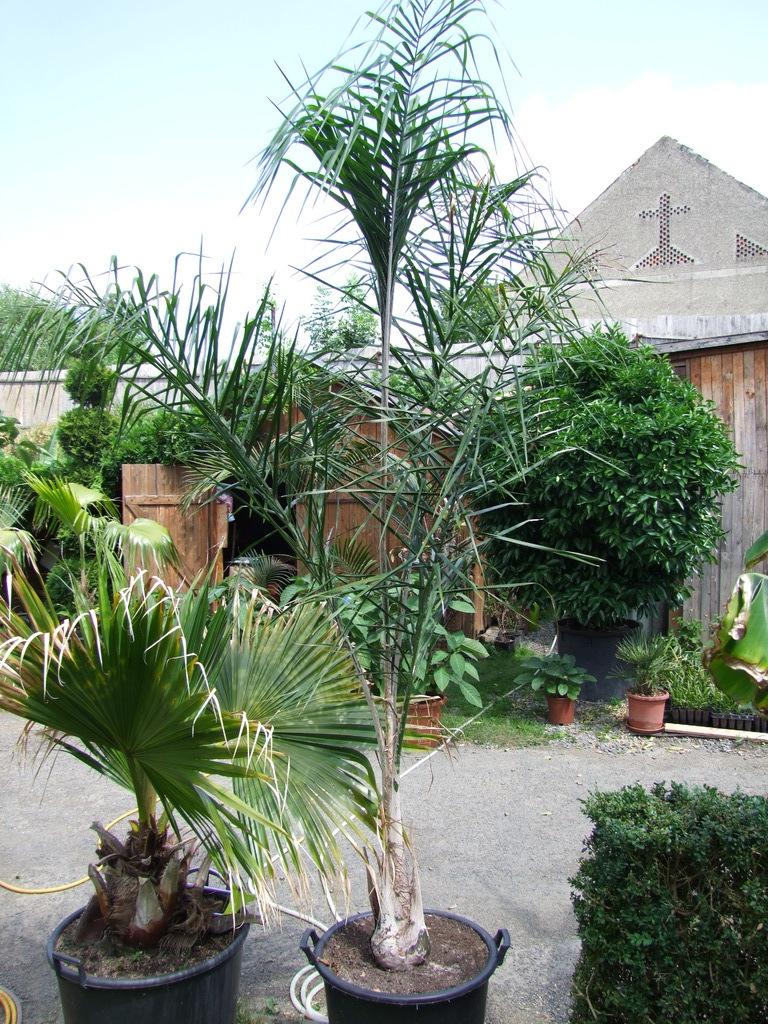 Léto na zahradě DSCF5995